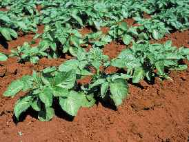 crops_richsoil