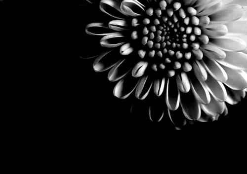 funeral%20flowers