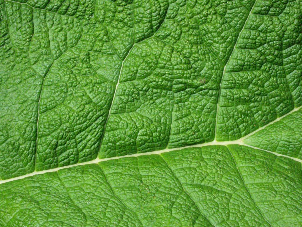 green-leaf-veins