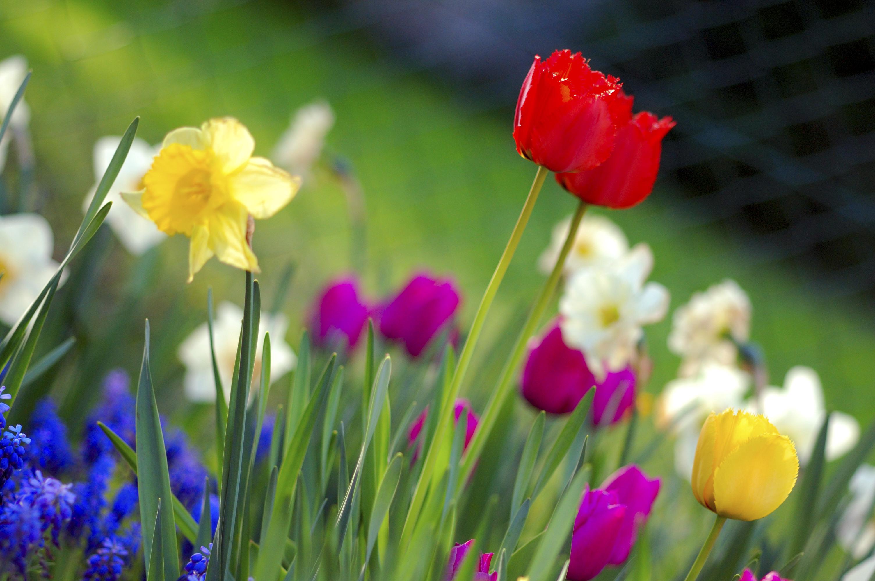 Spring Quiet Jameswoodward S Weblog