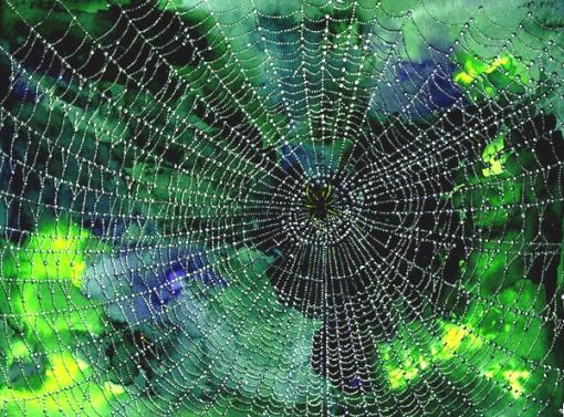 spider-web[1]