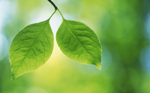 Twin-Green-Leaves-Pictures[1]