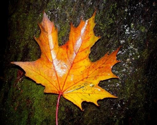 Autumn-wallpaper-autumn-9444954-1280-1024[1]