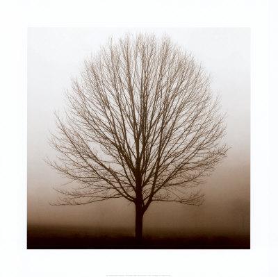 stillness1[1]