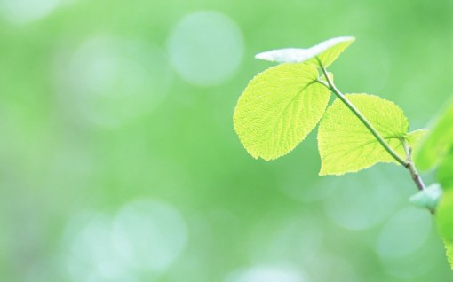 Fresh_green_leaves_JK163_350A[1]
