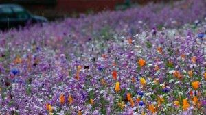 _76042878_flowers[1]
