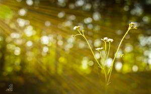 morning-sunlight-bokeh-photography-facebook-timeline-cover,1280x800,66699[1]