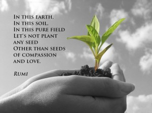 seeds-of-compassion-and-love-rumi[1]